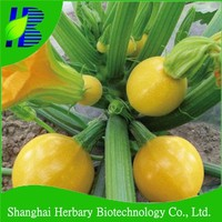 Asian vegetable seeds round marrow seeds for growing