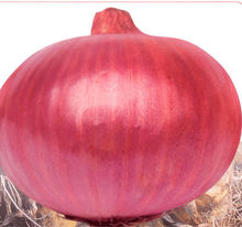 Best F1 hybrid onion seeds for Growing