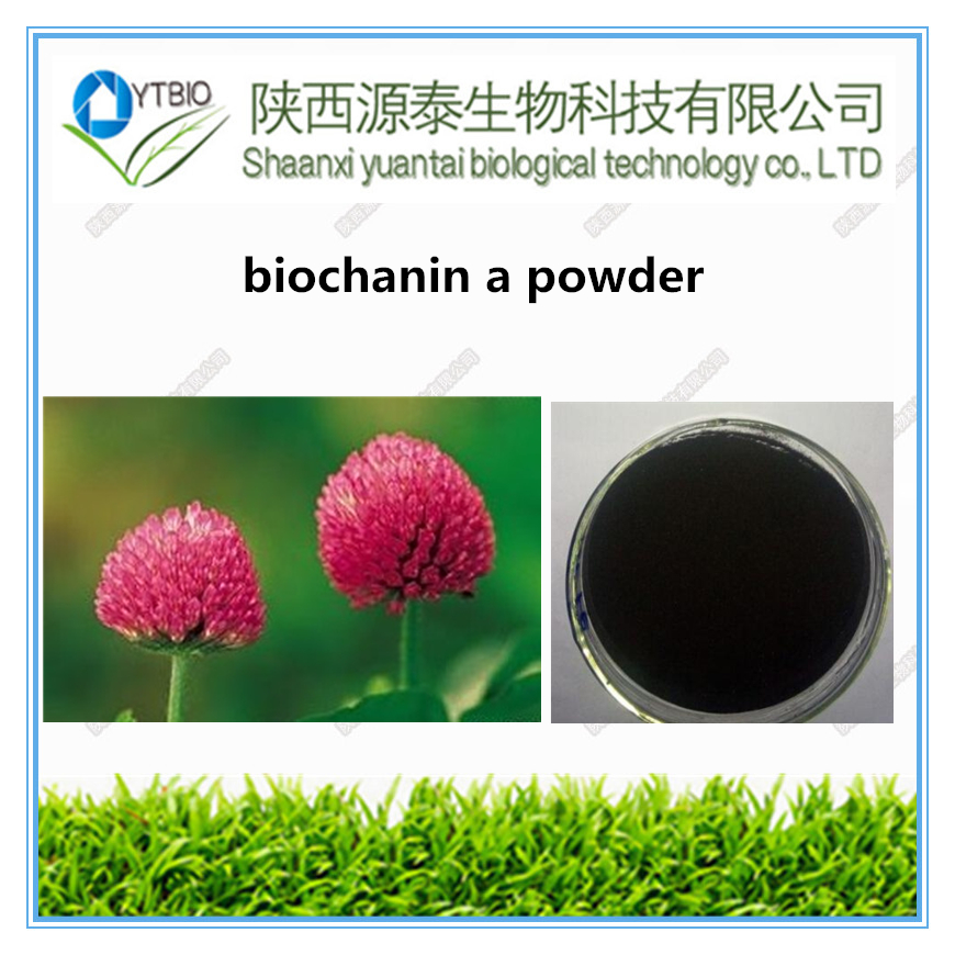 Best Selling Pure Biochanin A Powder