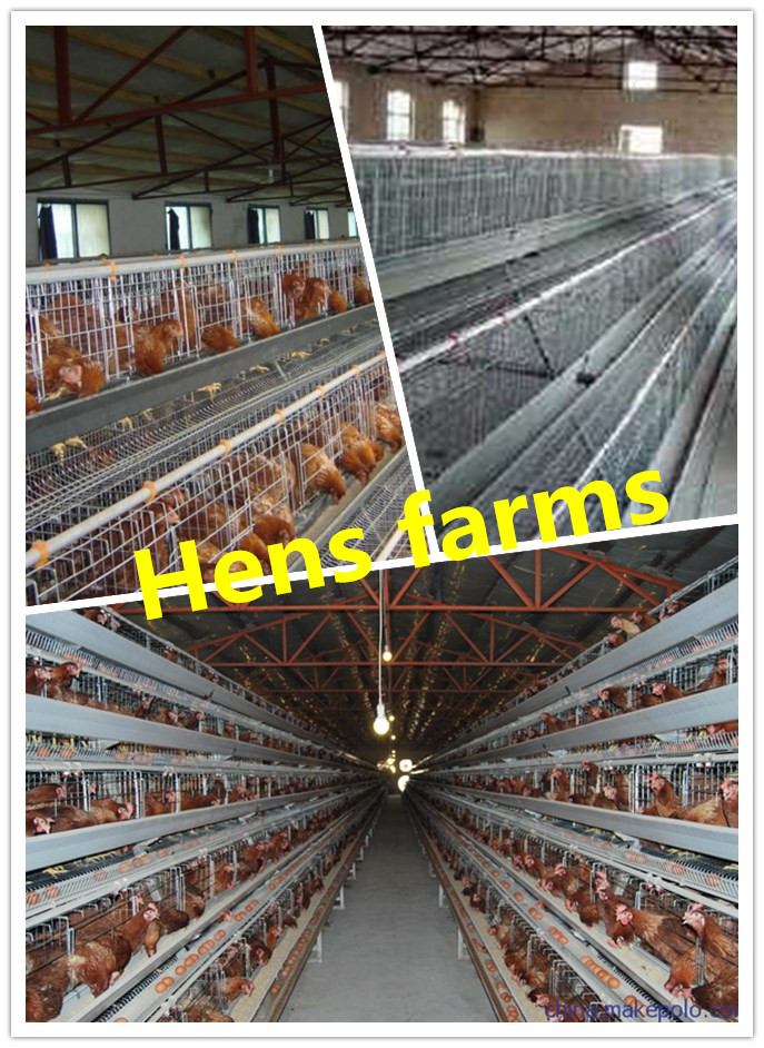 Hot-sales stainless iron cages for poultry layer chicken /laying hens chicken cage for chicken eggs