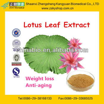 Pure Lotus Leaf Plant Extract/Nuciferine