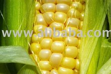 Brazilian maize #2, yellow, NON GMO.