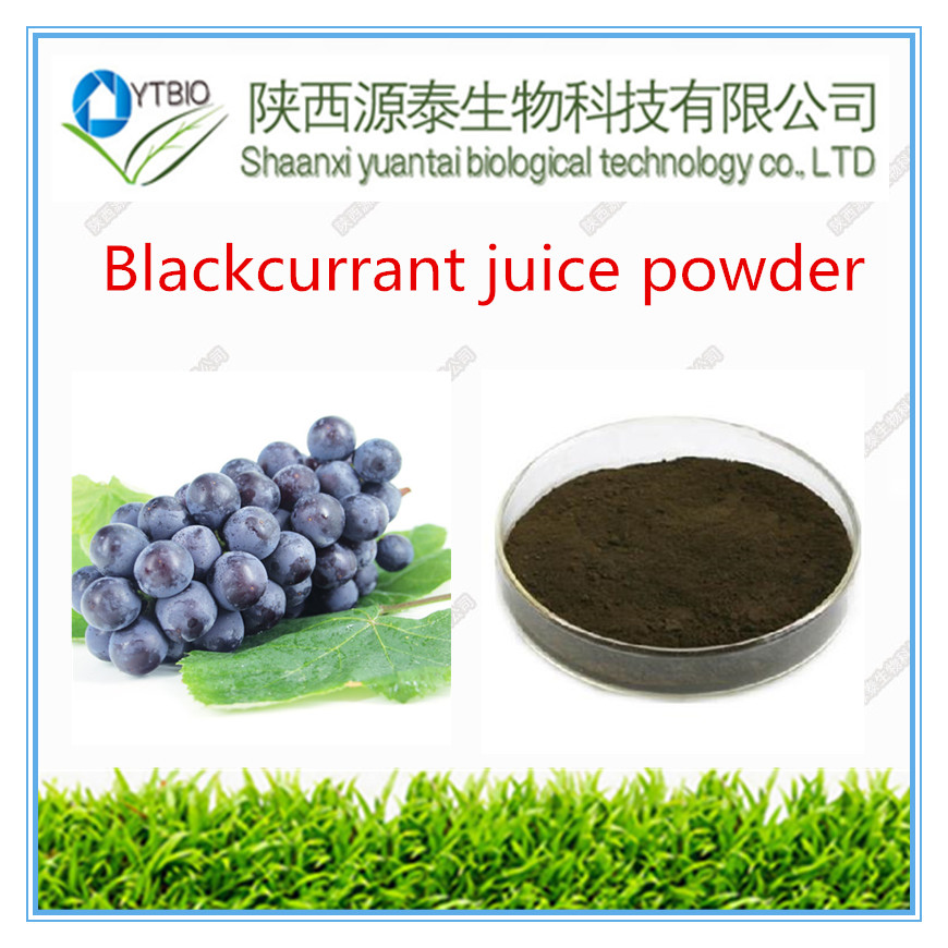 Best selling instant Blackcurrant juice powder
