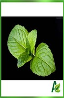 100% pure Peppermint oil as the good cosmetic flavor and food flavor in hot sale