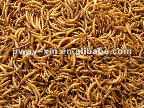 Freeze dried mealworm for sale