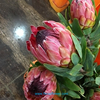 wholesale fresh cut flowers wholesale fresh cut Protea