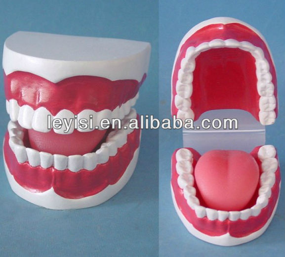 High quality New Style Dental teaching medical model for sale
