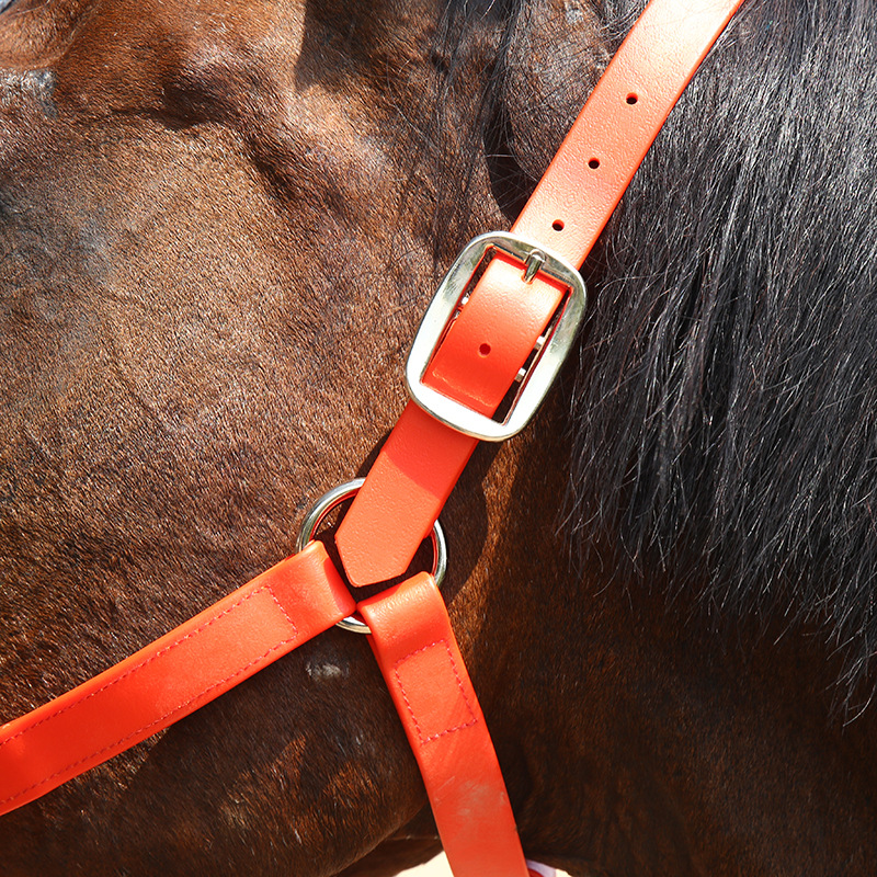 Wholesale horse racing equipments high tensile PVC horse bridle