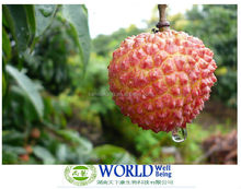 Best Qualtiy litchi seed extract/lychee powder/Manufacturer litchi seed extract