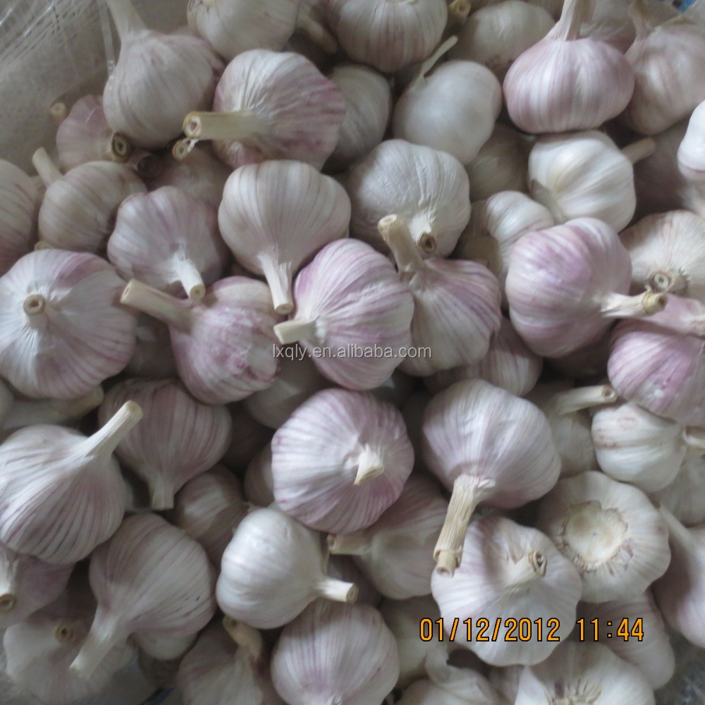 Sell High-quality Fresh Natural pure white garlic export