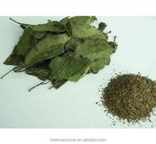Dried leaves of Eucommia ulmoides Oliver for tea and herbal medicine