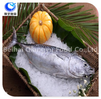 frozen bonito skipjack fish sale