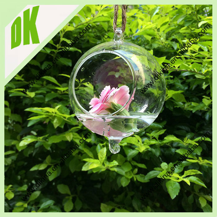 Hanging AIR PLANT KIT, Tillandsia Terrarium Glass Globe Orb , custom hanging round glass bowl vase