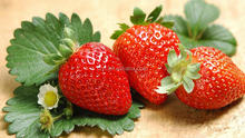 2014 May new crop IQF frozen strawberry fruit iqf strawberry