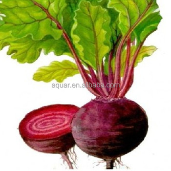 100% Natural Beet Root powder Extract 4:1, 10% Betanin