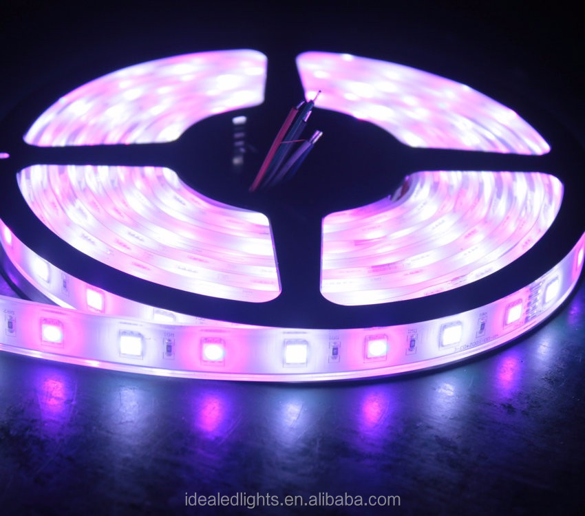 High quality 5m SMD 5050 RGB+W Flexible LED Strip Light in IP67