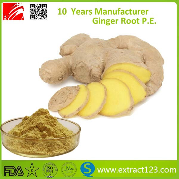 Factory supply high quality Chinese ginger extract powder/ Gingerol Ginger Root Powder/Ginger Root Extract 5%