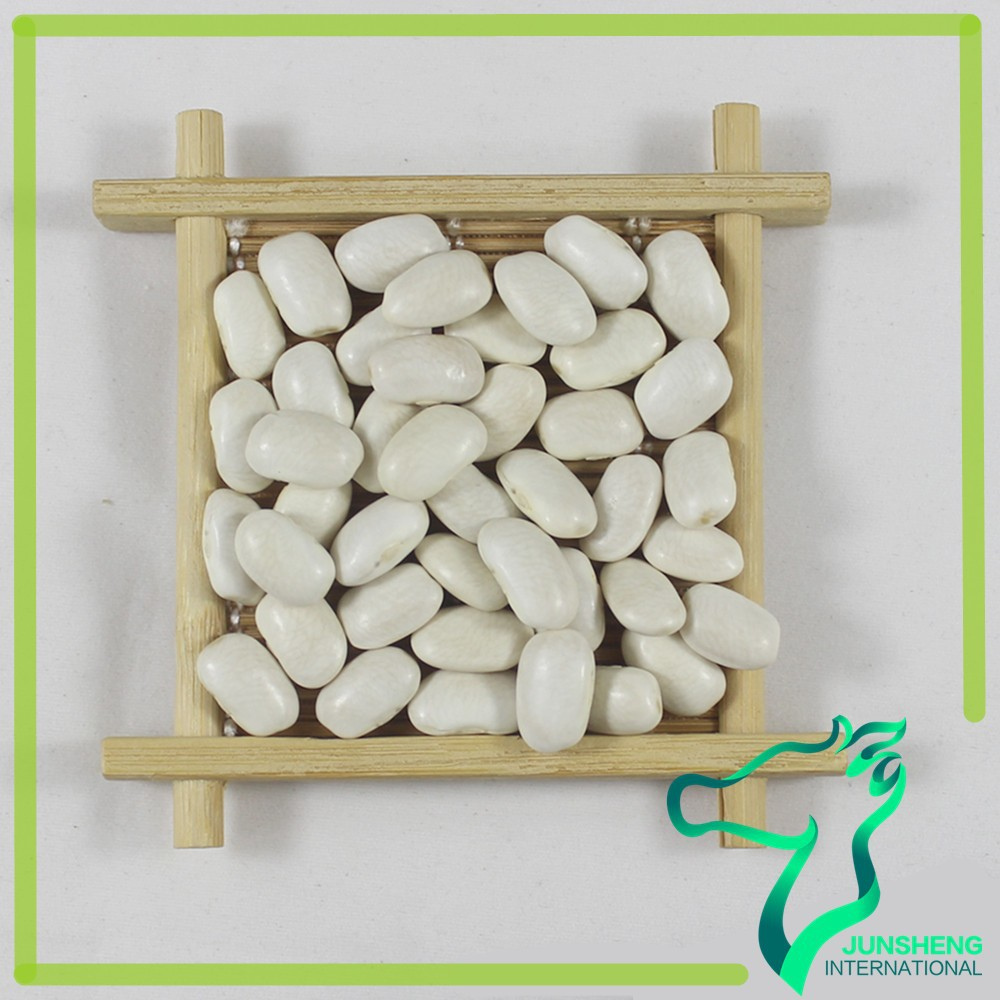 dry beans dry large Square shape white kidney beans Common Cultivation Scientific Name of Beans