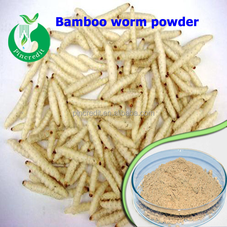 Top quality Organic inspect powder Pure Bamboo worm powder/Bamboo worm powder