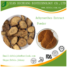 Pure Natural Twotooth Achyranthes Root Extract by TLC 10:1