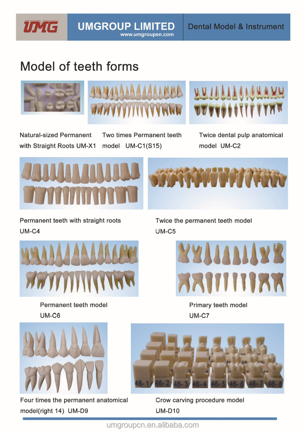China wholesale Straight roots model dental teeth model from UMG