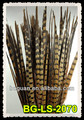 "22""-26"" Ringneck Pheasant Tail Feathers"