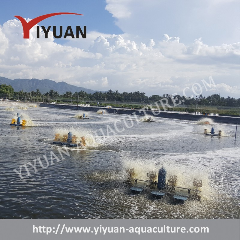 List manufacturers of fish pond paddlewheel aerator buy for Fish pond aerator