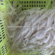 fresh silver fish and high quality seafood fish flounder