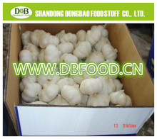 normal white fresh garlic with good quality in China