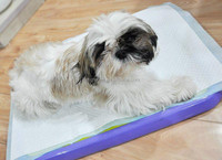 high absorbent dog training pad