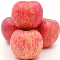 hot sale high quality fuji apples wholesale fruit prices