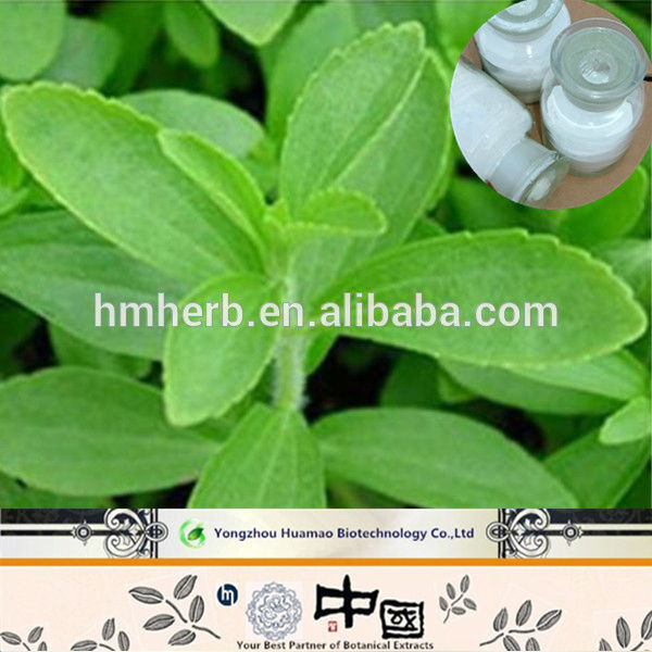 Wholesale alibaba stevia plant seeds