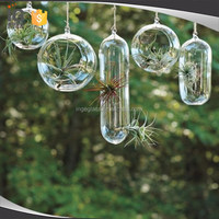 Glass Hanging Capsule Terrarium with Rope for sale