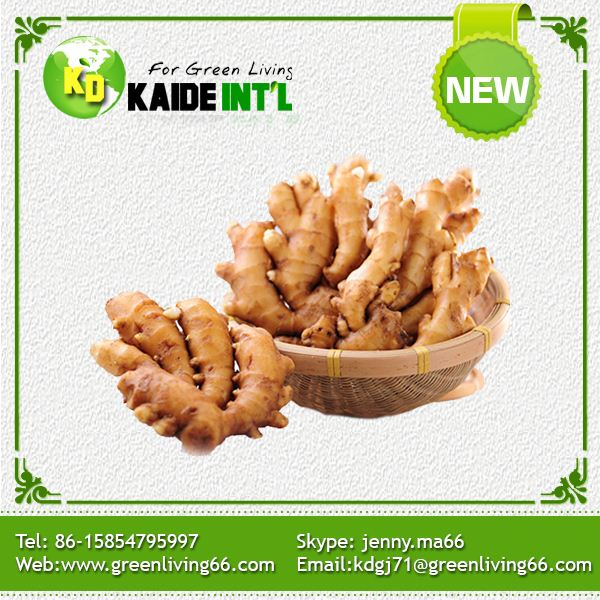 No Complain Excellent Quality Organic Ginger Price For Market Prices