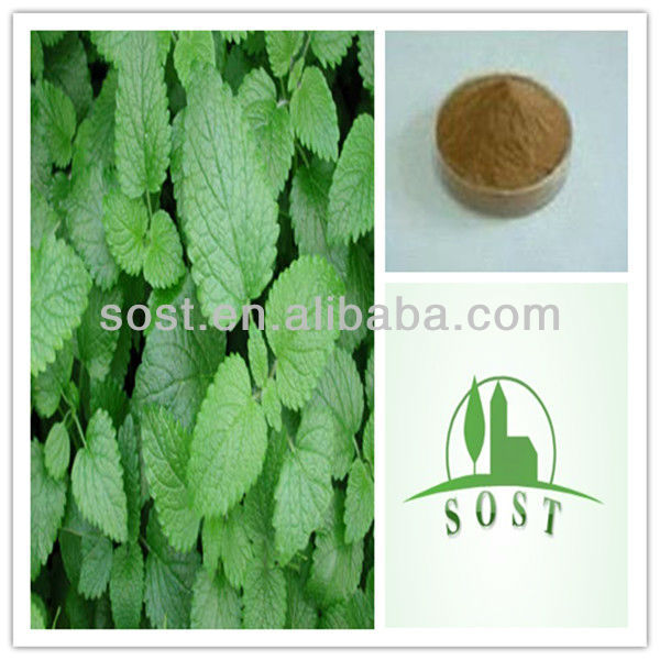 2013 new product lemon balm leaf extract