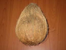 coconut in tamilnadu