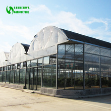 Multispan Tunnel Greenhouse for strawberry grape raspberry , Agricultural Green houses