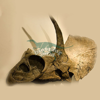 Eotriceratops Skull with Simulation Animal Toy