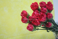 Various hot sale carnation cut flower flower planting base