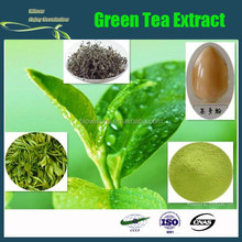 Manufacturer Pure Natural High Quality Green Tea Extract, Green Tea Extract Powder, Tea Polyphenol