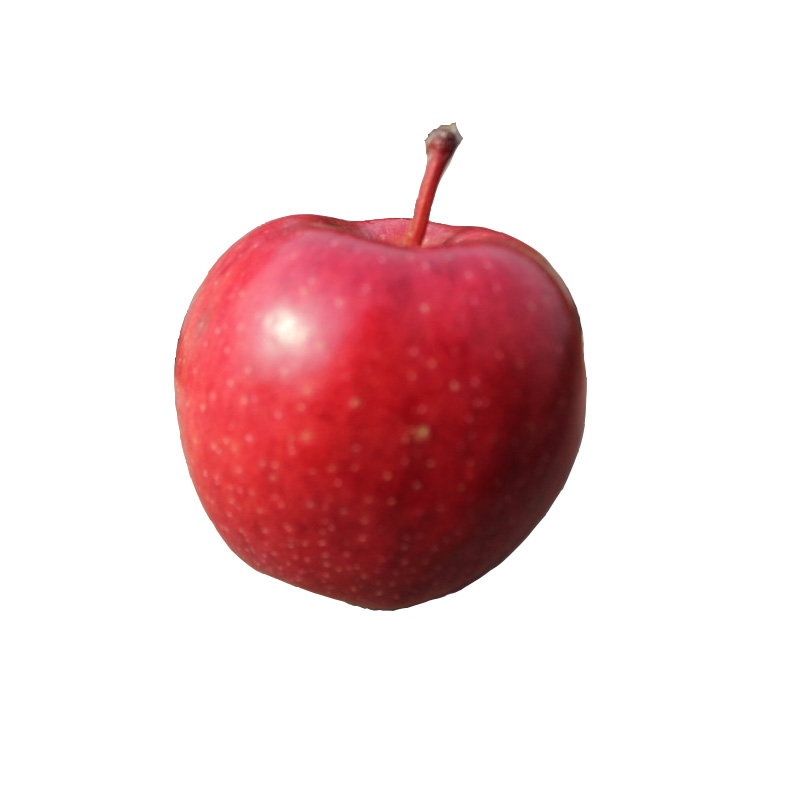 Red delicious apple manufacturers