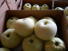 Gloden delicious apple in apple fruit wholesale chinese golden apple
