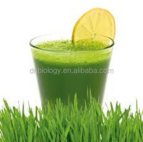 Factory sell wheat grass juice powder wholesale,Increase Blood Wheat Grass Powder Soft Capsule