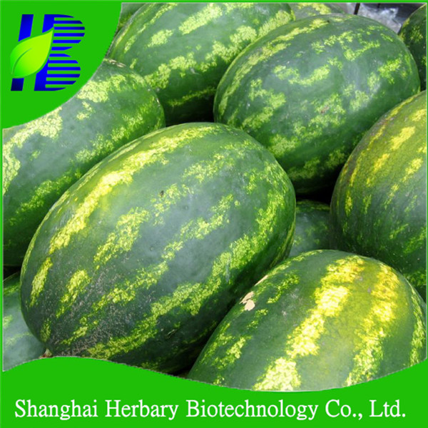 2017 Hybrid F1 watermelon seed for planting