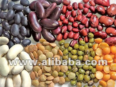 SOY, SOYBEANS, PEAS, LENTILS, CHICKPEAS, RED KIDNEY BEANS, GREEN BEANS, BARLEY, BUTTER BEANS, RICE, MUNG BEANS