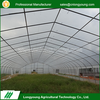 Factory Price Commercial Plastic Tunnel Greenhouse