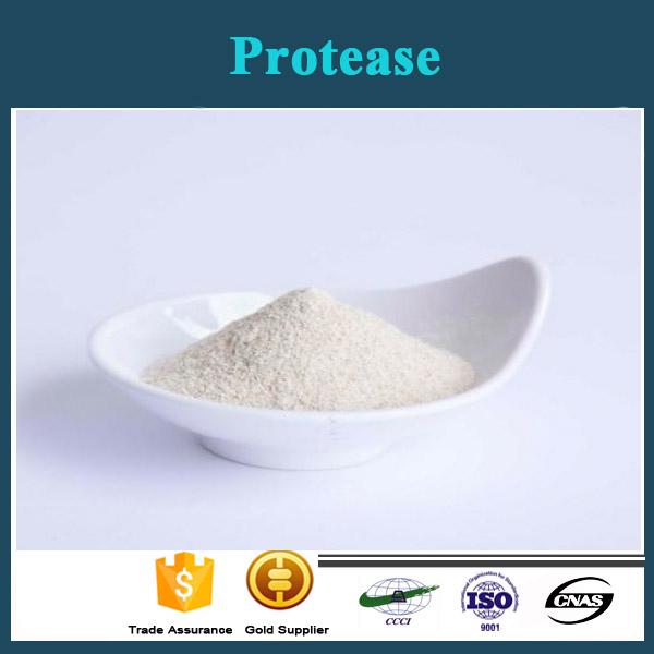 Hot selling high quality Acid 9025-49-4 Protease with reasonable price and fast delivery!!