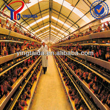 Poultry farm equipment multi-tier layer chicken cage for Algeria
