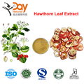 Fresh Hawthorn berry/fruit extract with free samples