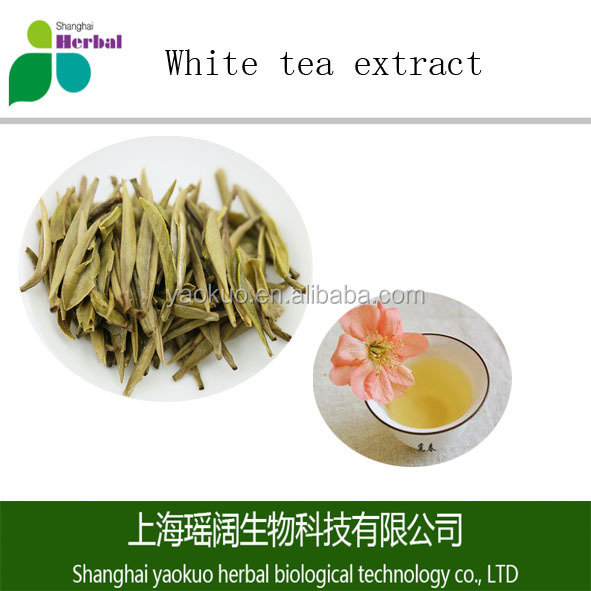 Pure organic White tea extract in bulk